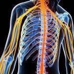 Živčni sistem